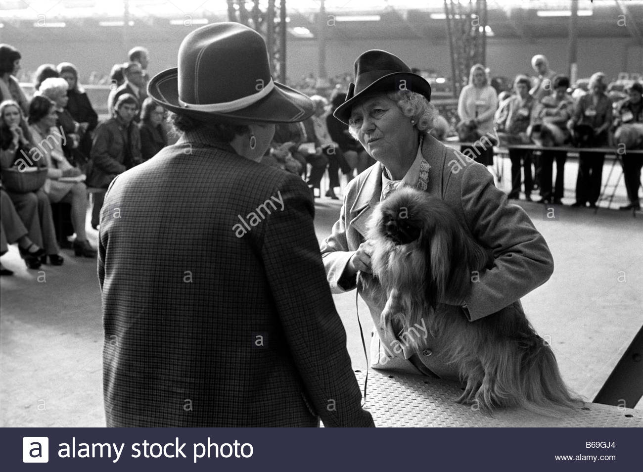 The English at play in the 1970s Part 2 Judging at Crufts Dog Show in London - Stock Image