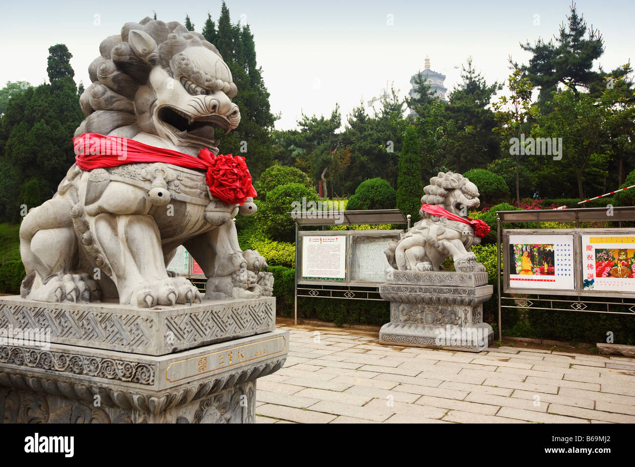 Lion statues in a temple, Zhanshan Temple, Qingdao, Shandong Province, China - Stock Image