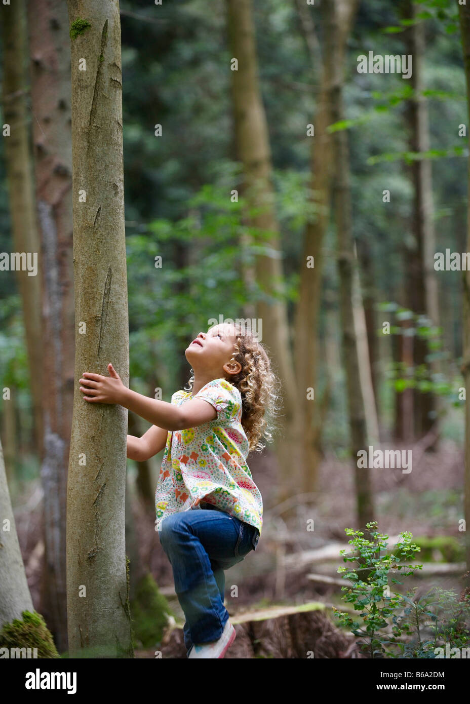 Young girl starting to climb tall tree - Stock Image