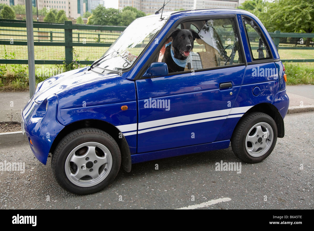 Dog panting in electric car - Stock Image