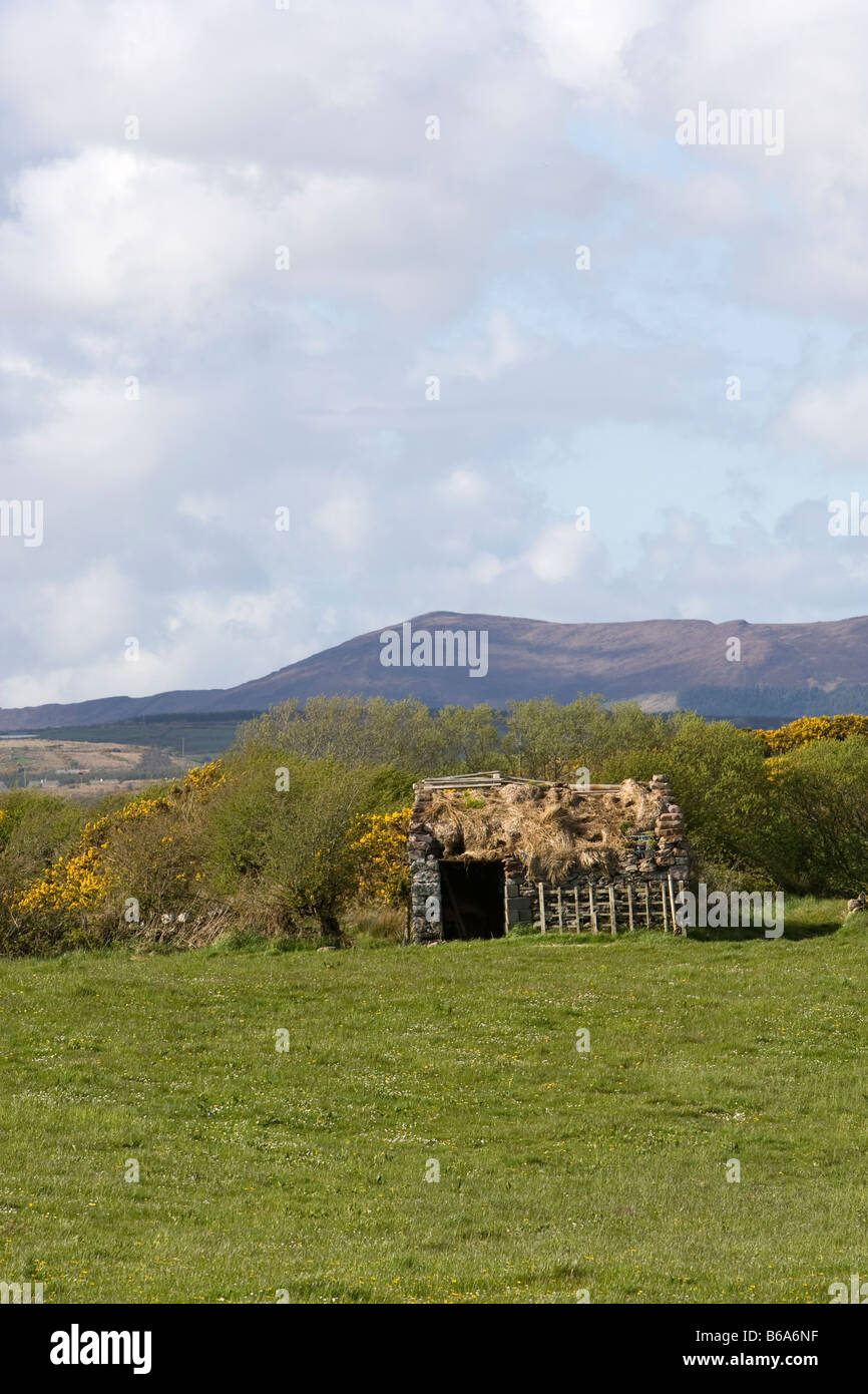 Derelict hut in a field in County Mayo, West Ireland - Stock Image
