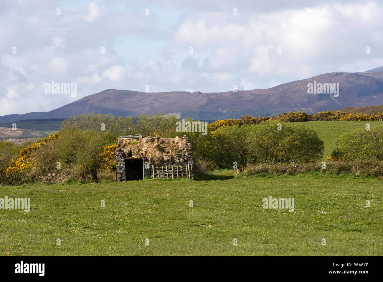 Derelict hut in a field in Co Mayo, Ireland - Stock Image