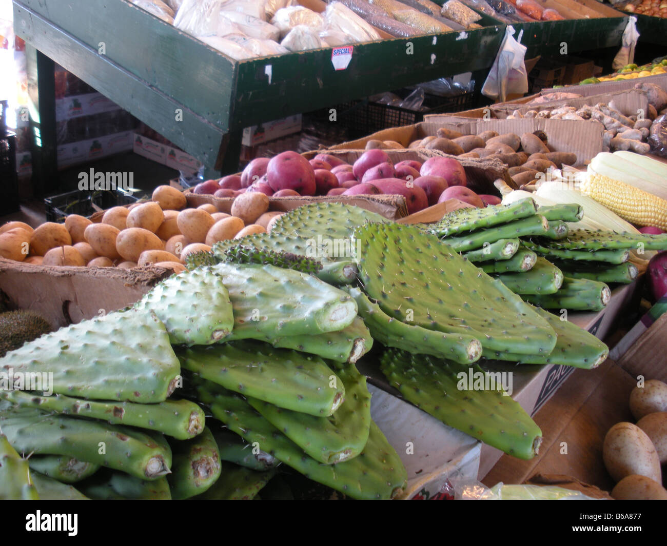 Edible cactus leaves for sale at a farmers market in Texas - Stock Image
