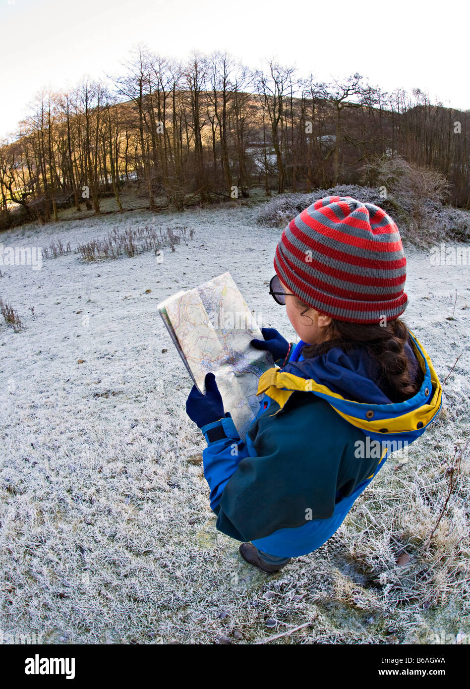 Woman reading map in winter condtions with frost on ground Cwm Llanwenarth Wales UK - Stock Image