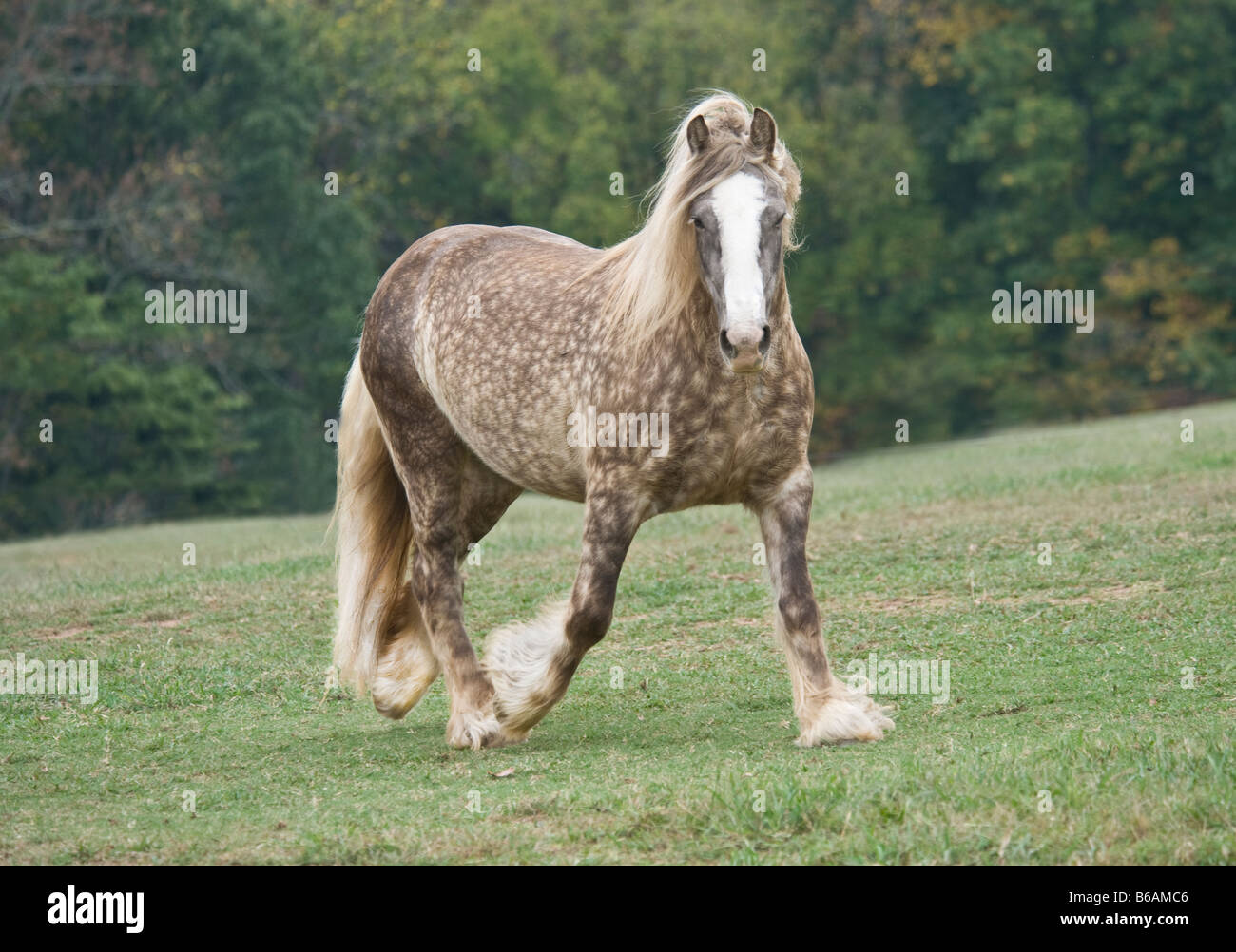 Palomino Mare High Resolution Stock Photography And Images Alamy