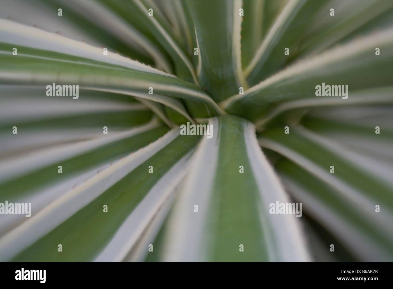 Closeup details of cactus - Stock Image