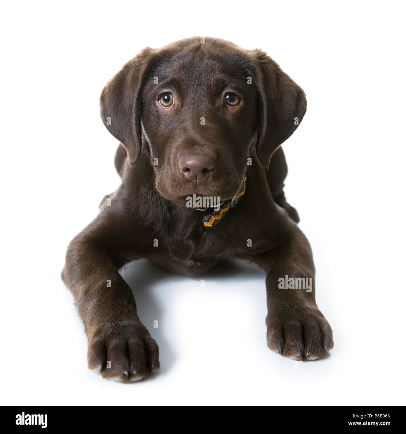 doggy - Stock Image