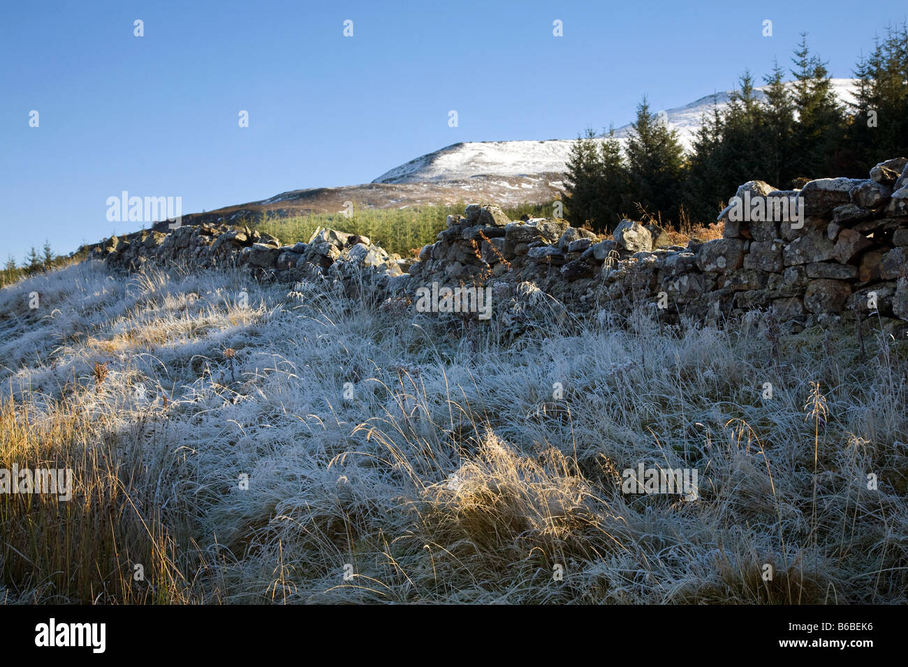 Frosted Grasses, winter, frosty, moorland landscape with stone wall or dyke, Braemar, Royal Deeside, Cairngorms - Stock Image