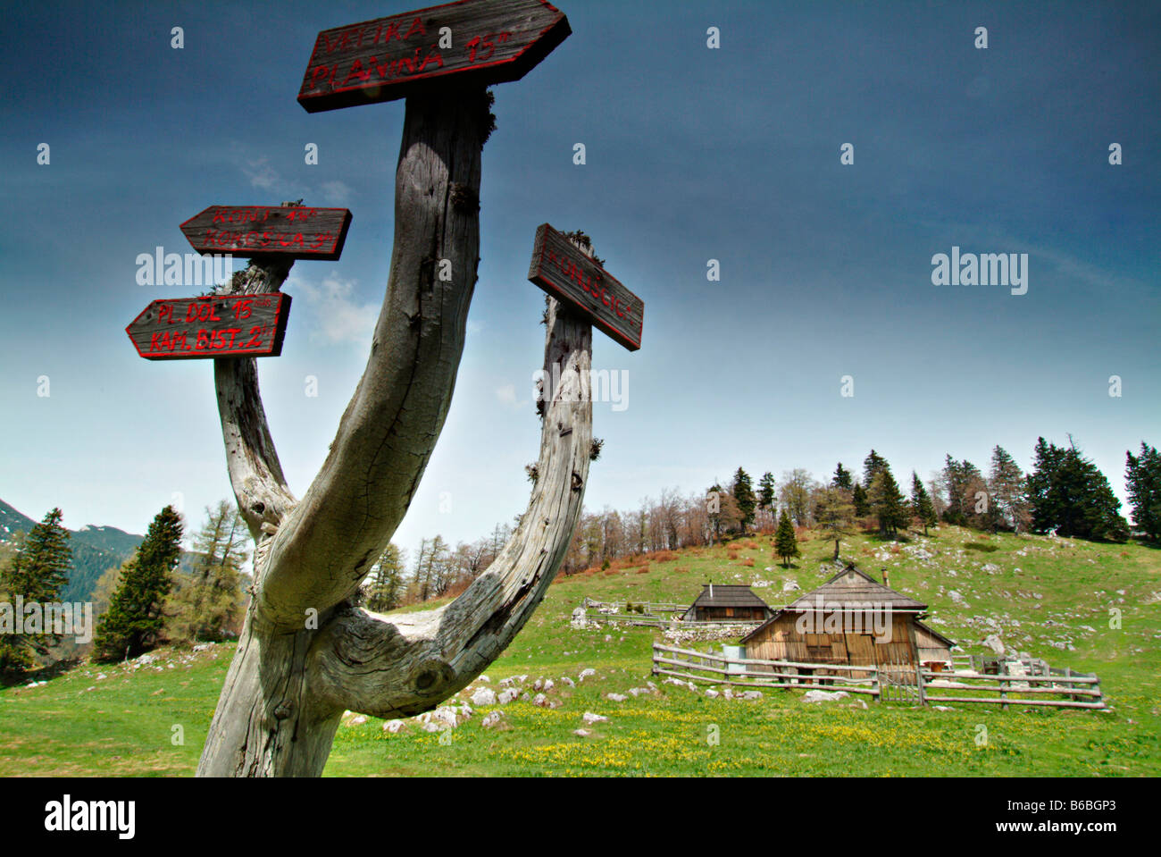 Signboards mounted on tree - Stock Image