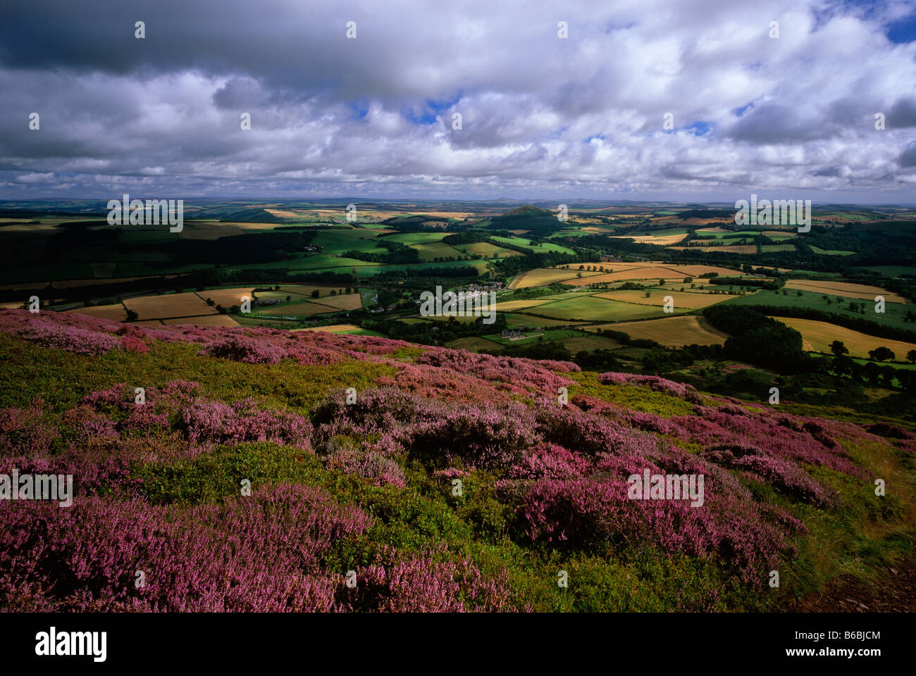 Eildon Hills in summer heather, near Melrose, Scottish Borders - Stock Image