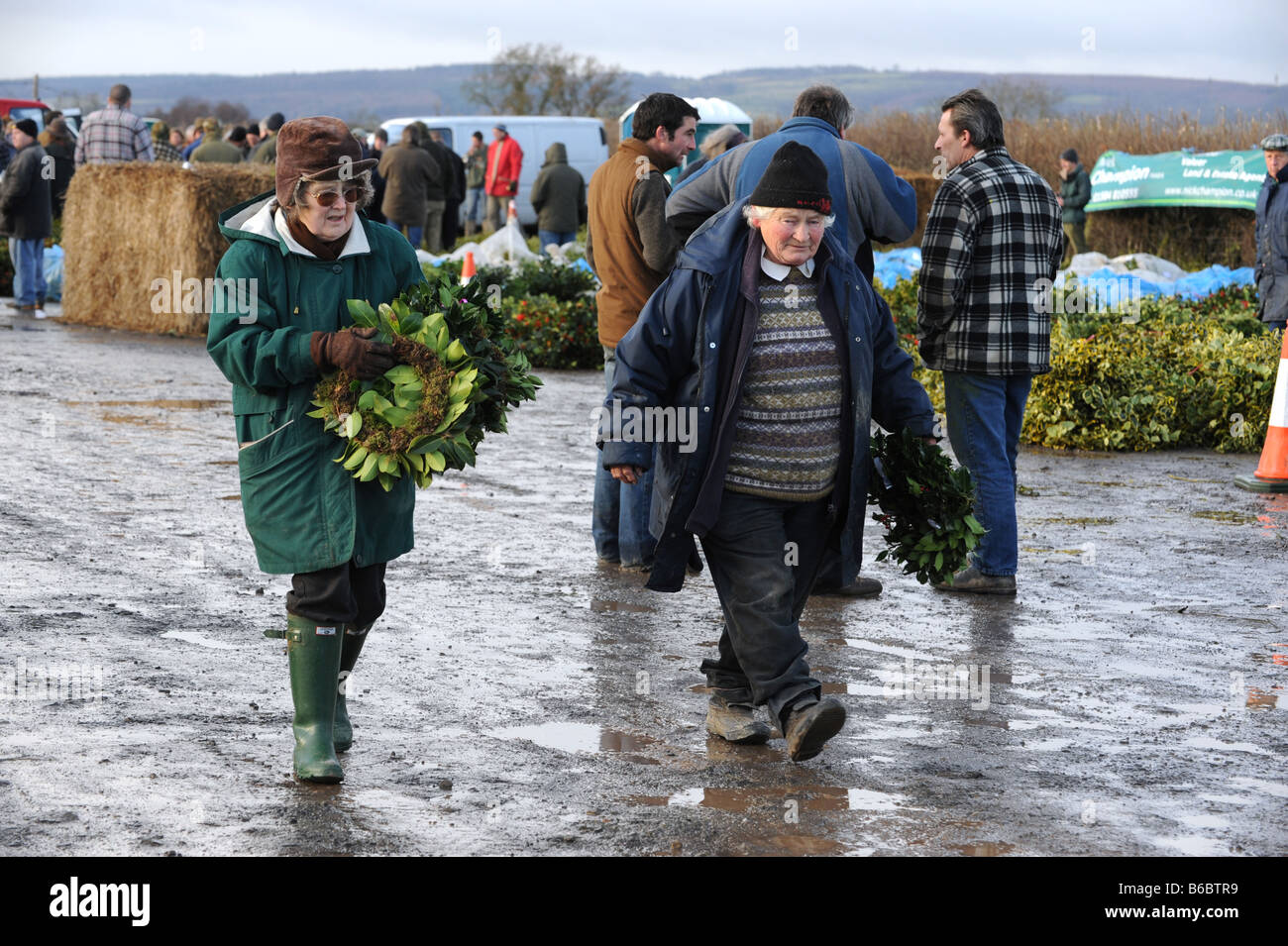 The annual winter Mistletoe and Holly auctions near Tenbury Wells on the borders of Shropshire Worcestershire and - Stock Image