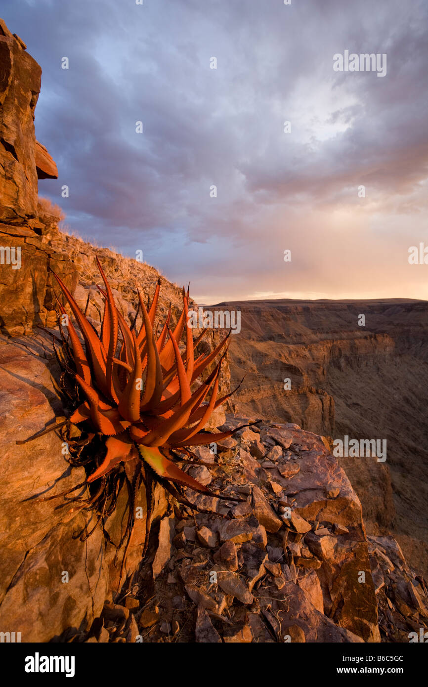 Africa Namibia Fish River Canyon National Park Hardy desert plants on rocky slopes above Fish River Canyon at sunset - Stock Image
