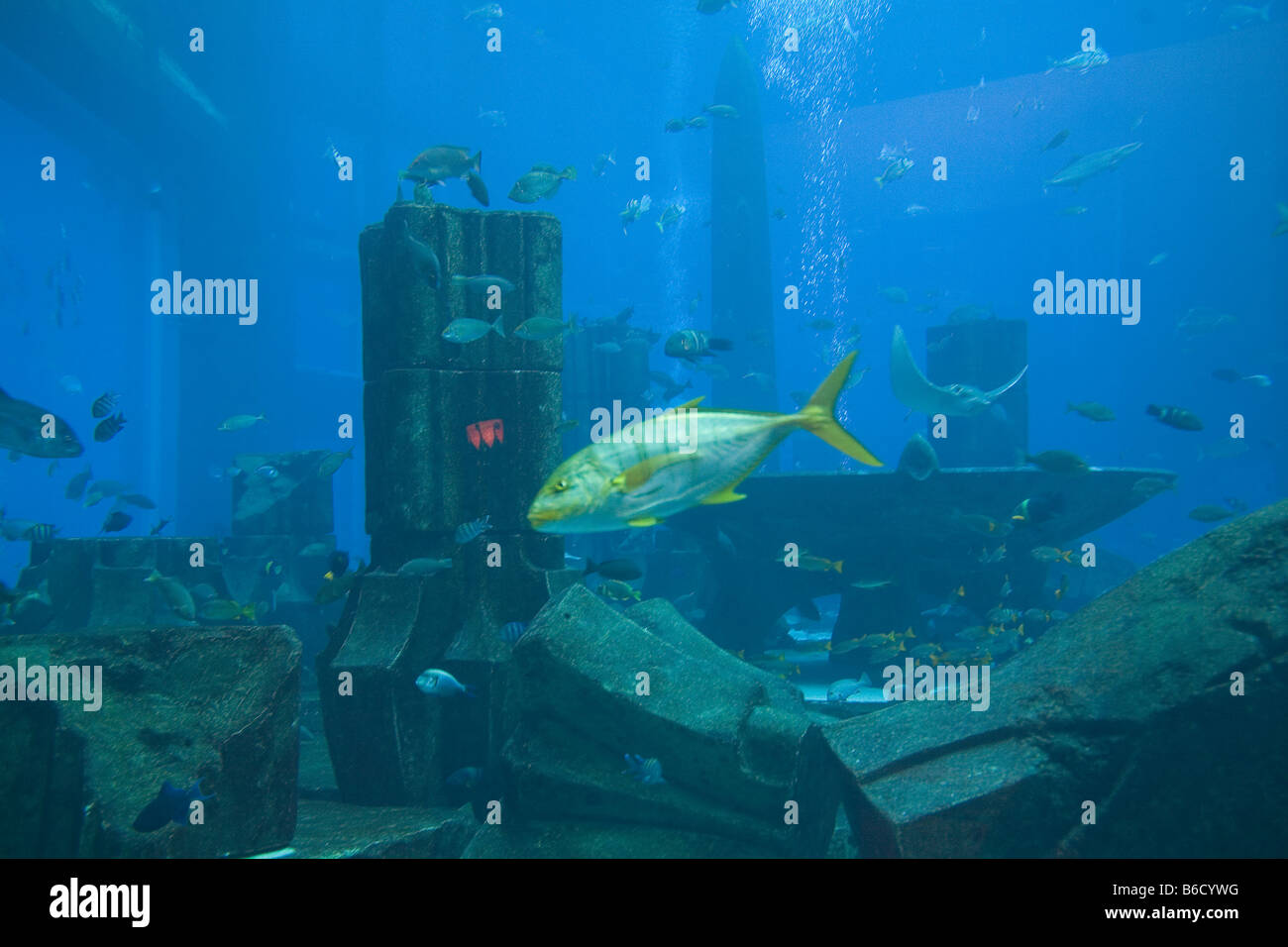 United Arab Emirates Dubai Palm Jumeira Atlantis Aquarium - Stock Image