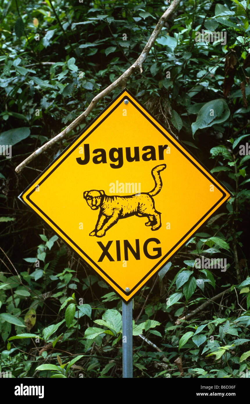 Surrounded by lush foliage, jaguar crossing sign beside road inside the Cockscomb Basin Wildlife Sanctuary aka the - Stock Image