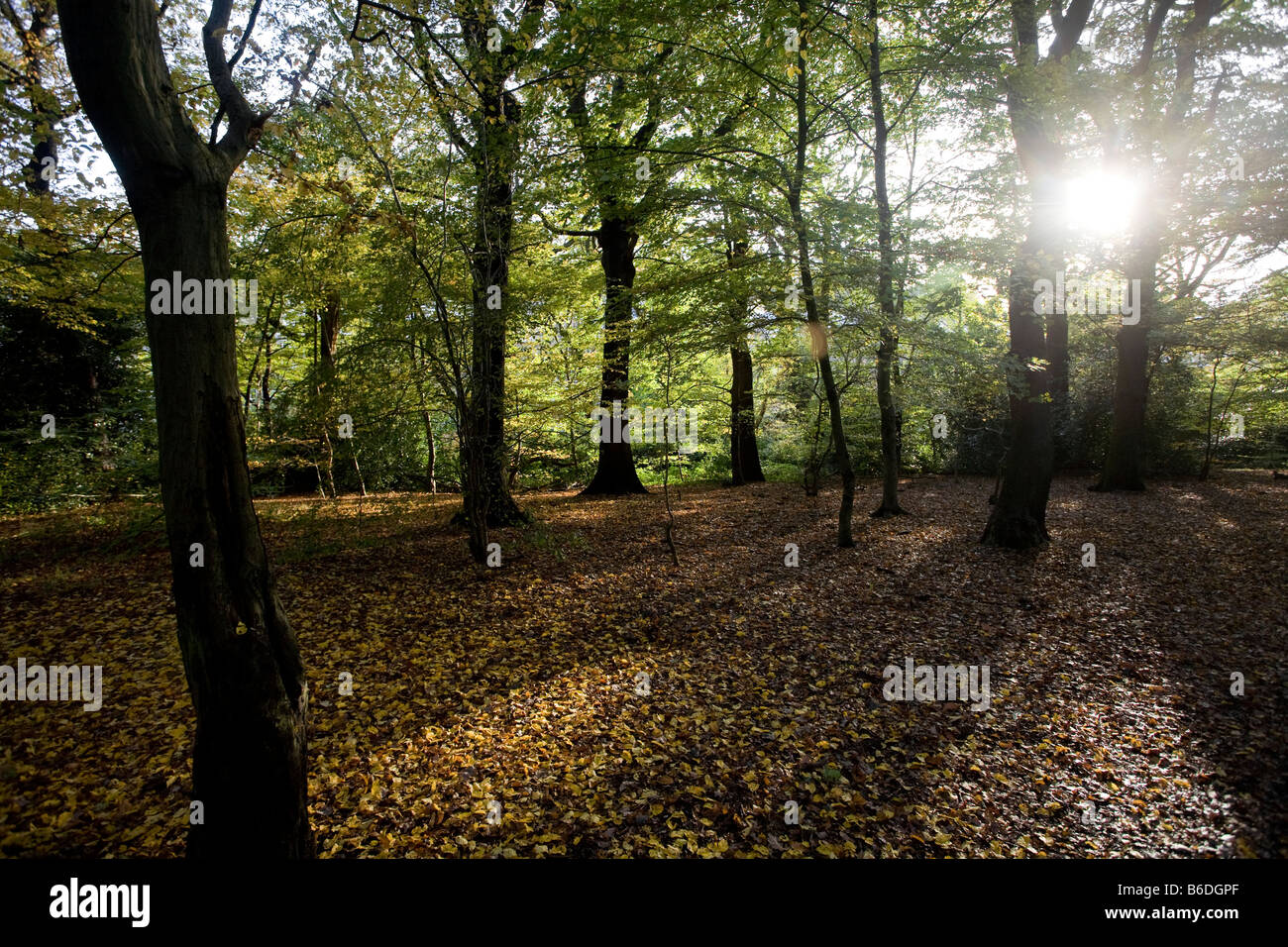 Queen's Wood in autumn. Haringey, London, England, UK - Stock Image