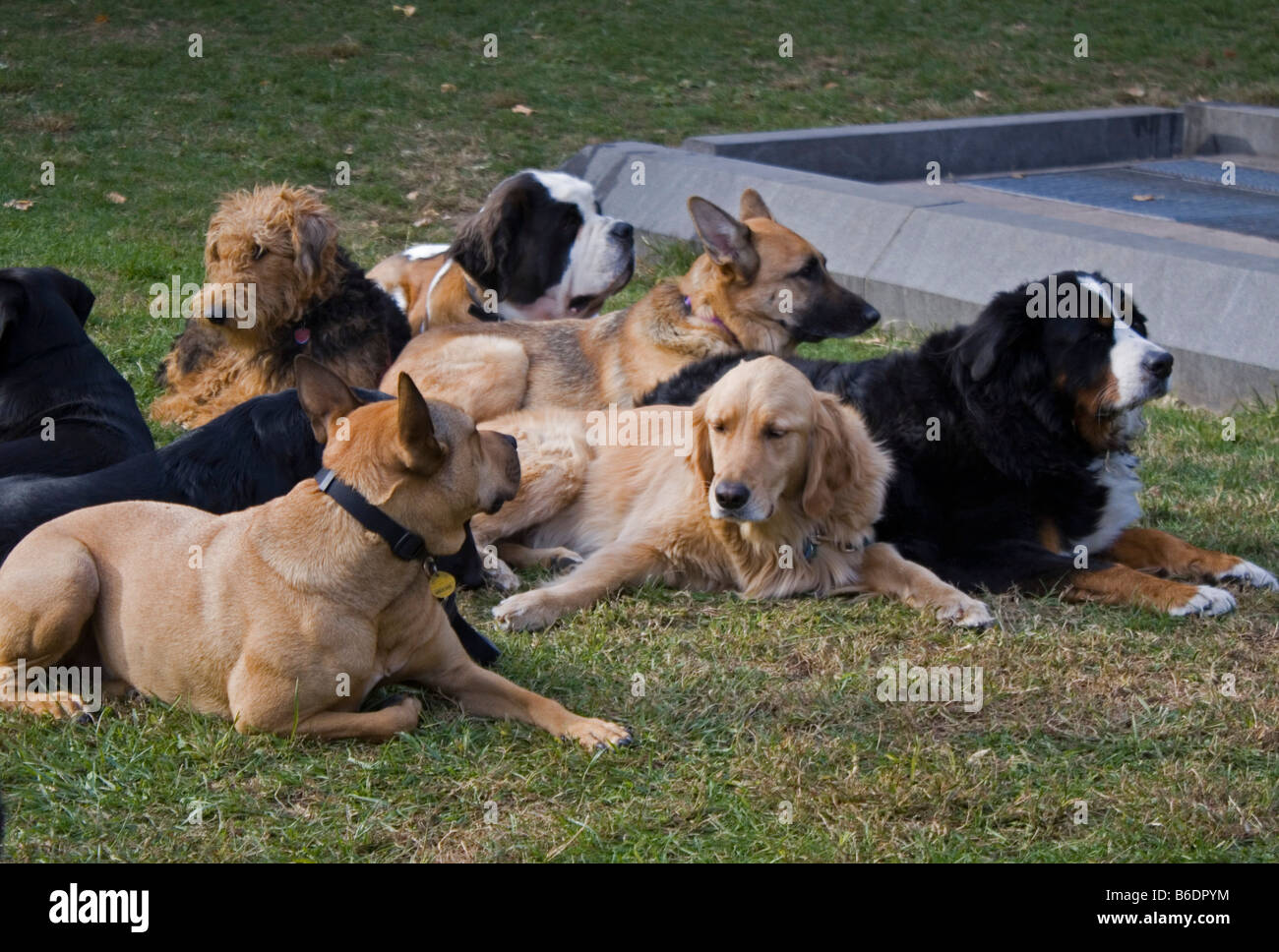 Dogs in Central Park - Stock Image