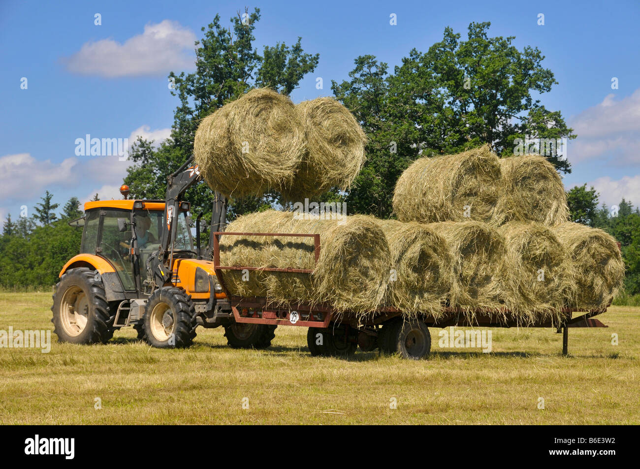 Make hay: A tractor with forks loads a trailer of hay balls. Stock Photo