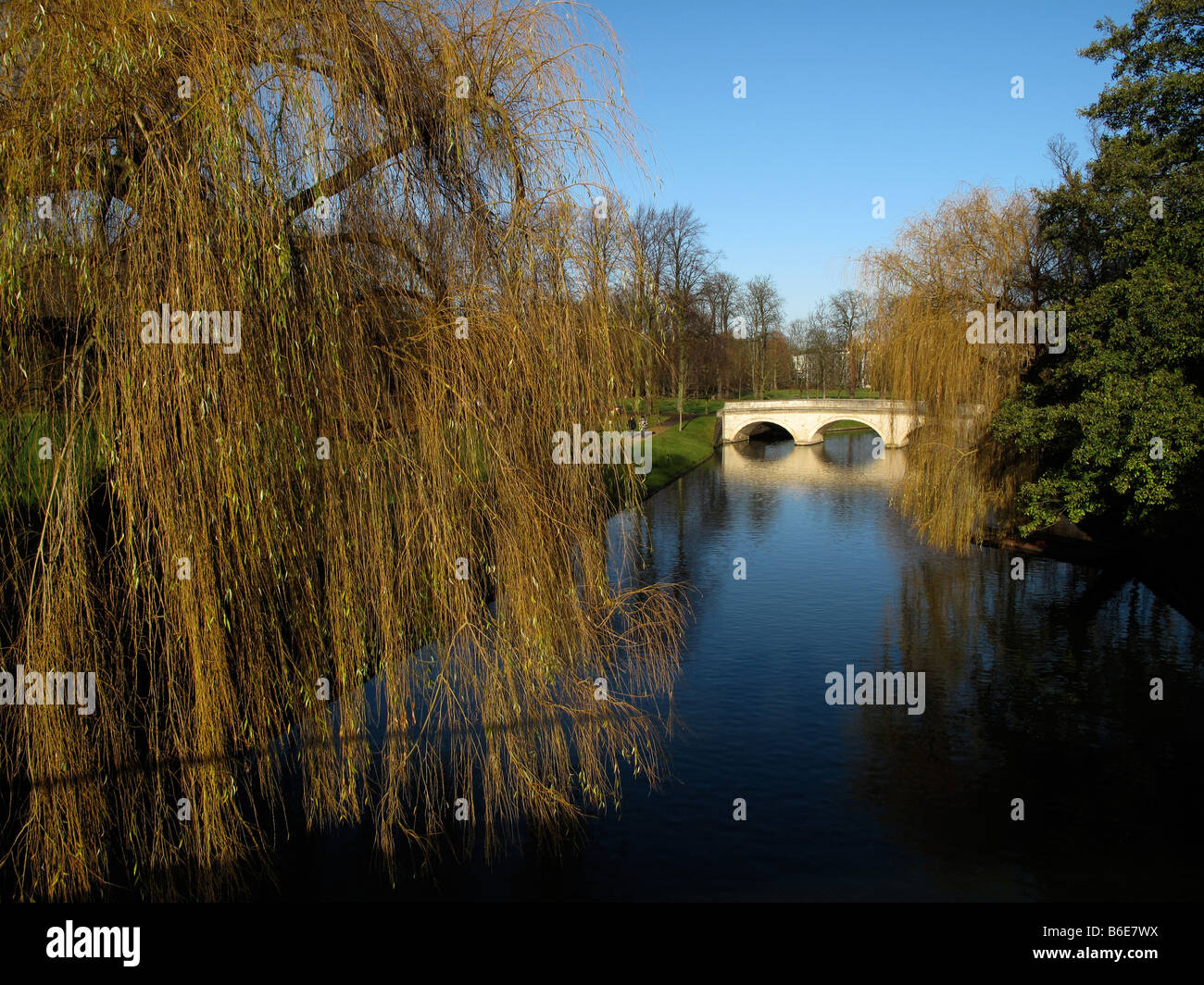 Cambridge bridge over the River Cam with Weeping Willows - Stock Image