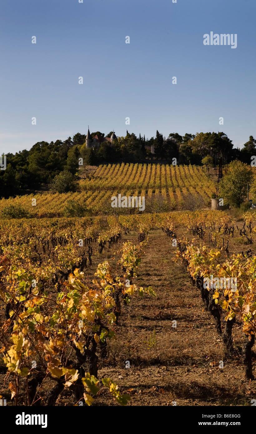 Vineyard near Aigues-Vivas, Languedoc-Roussillon, France - Stock Image