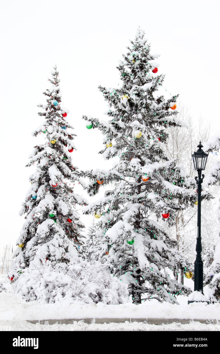 Decorated Christmas trees in Snow Stock Photo: 21214378 - Alamy