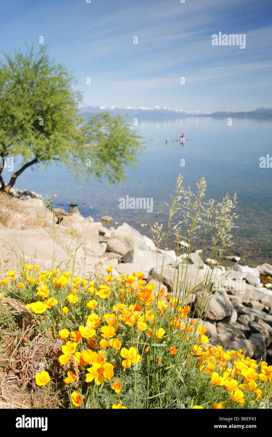 Landscape of Lake Nahuel Huapi with California poppies in the foreground - Stock Image
