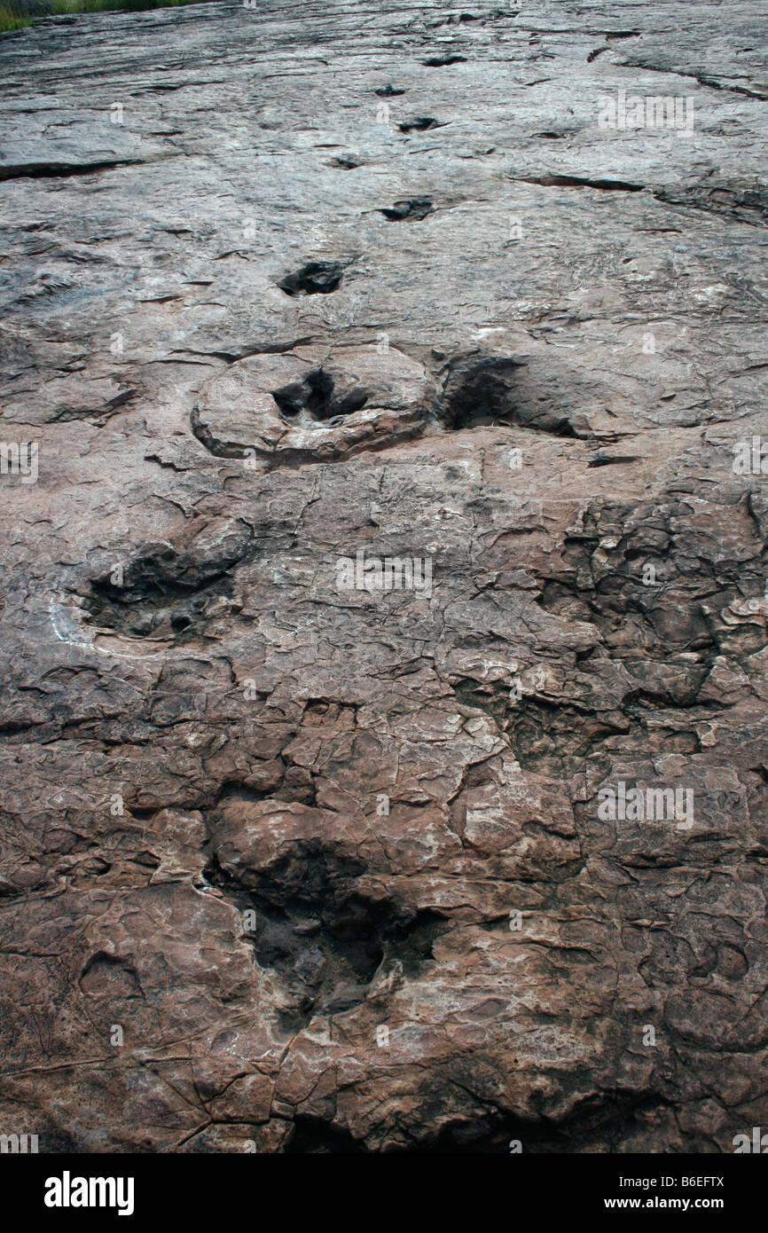 Dinisaur footprint - Stock Image