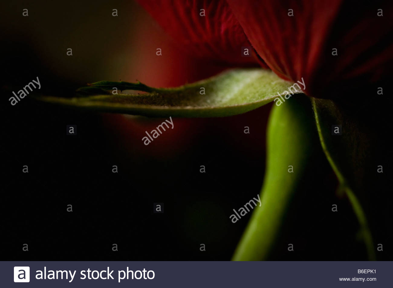 Close-up on flower - Stock Image