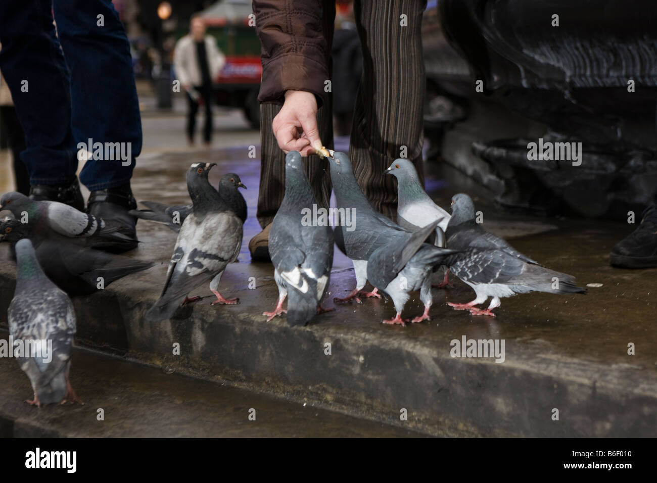 pigeons being fed in London city centre - Stock Image