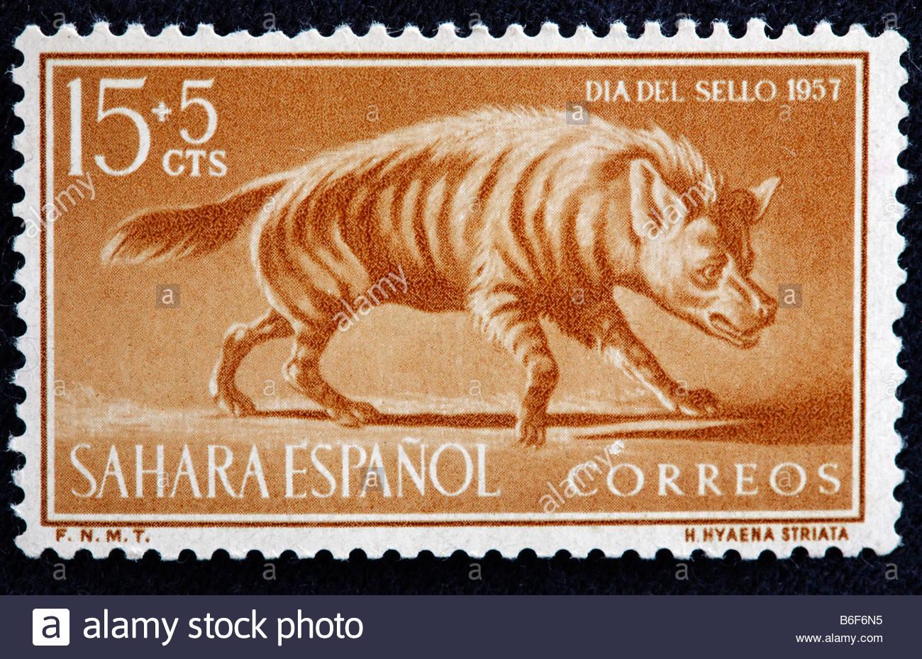 Striped Hyena (Hyaena hyaena), postage stamp, Spanish Sahara, 1957 - Stock Image