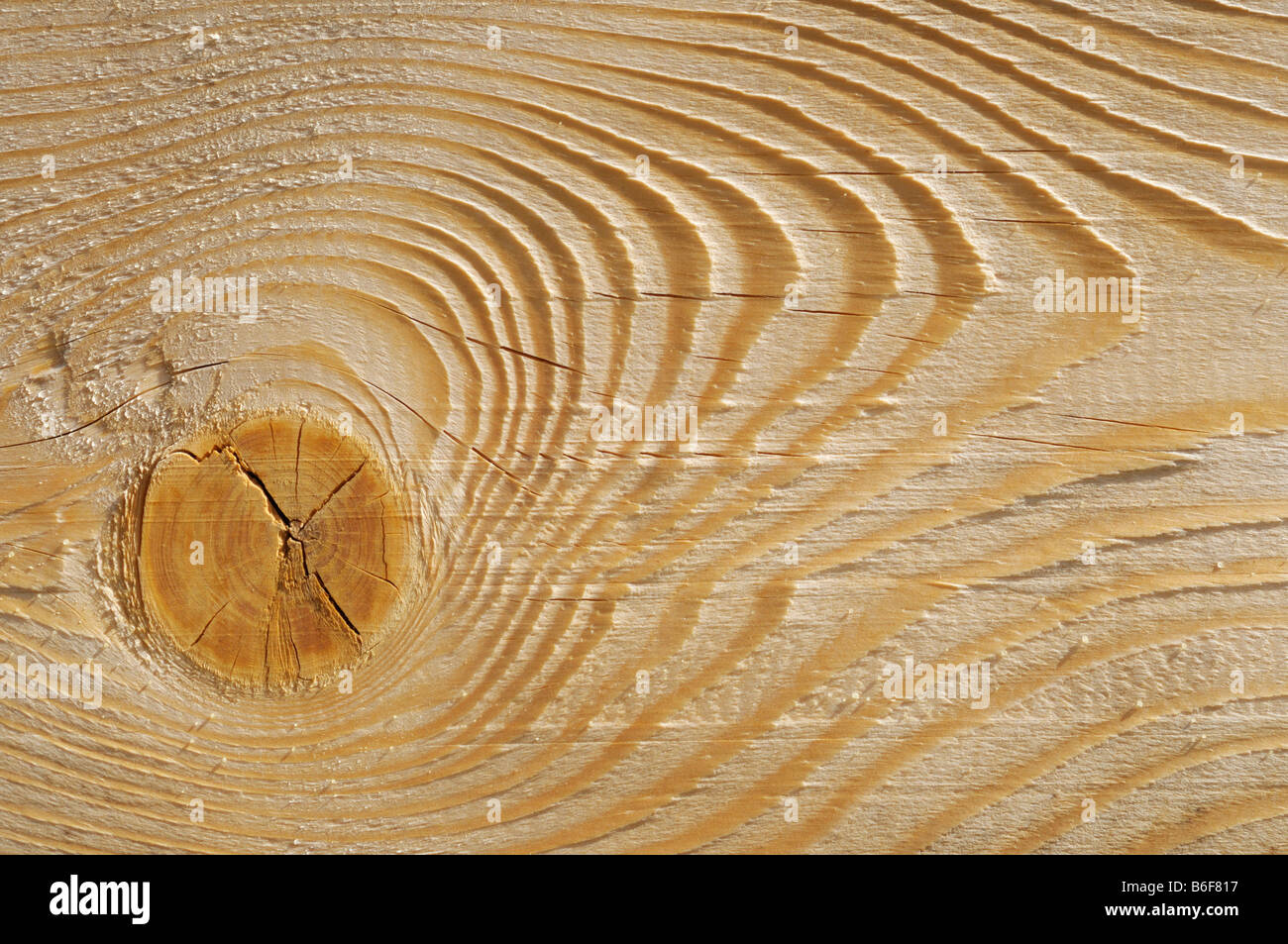 Wooden plank, detail showing a knot, grain and plane marks - Stock Image