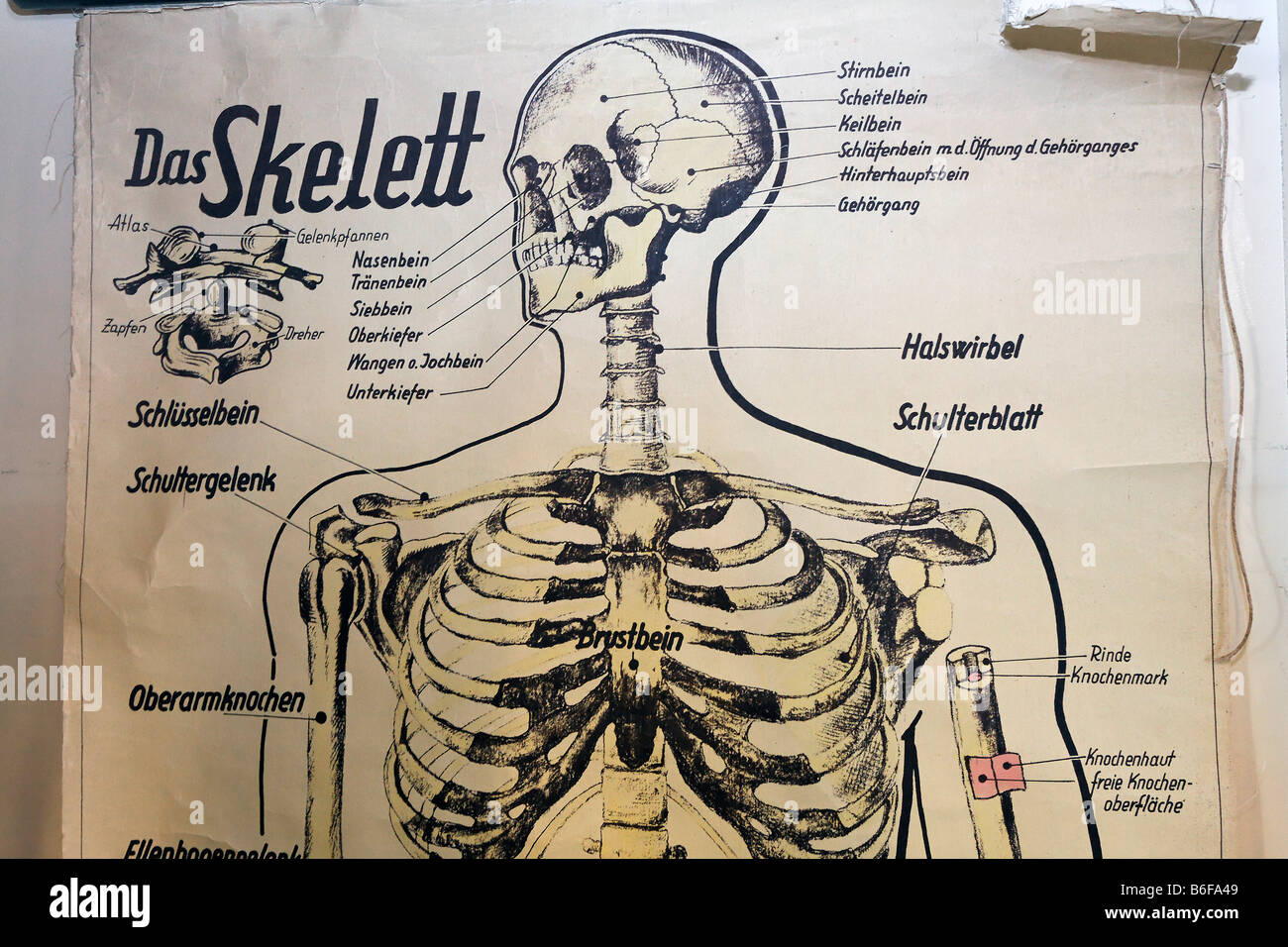 Alte Anatomie Stock Photos & Alte Anatomie Stock Images - Alamy