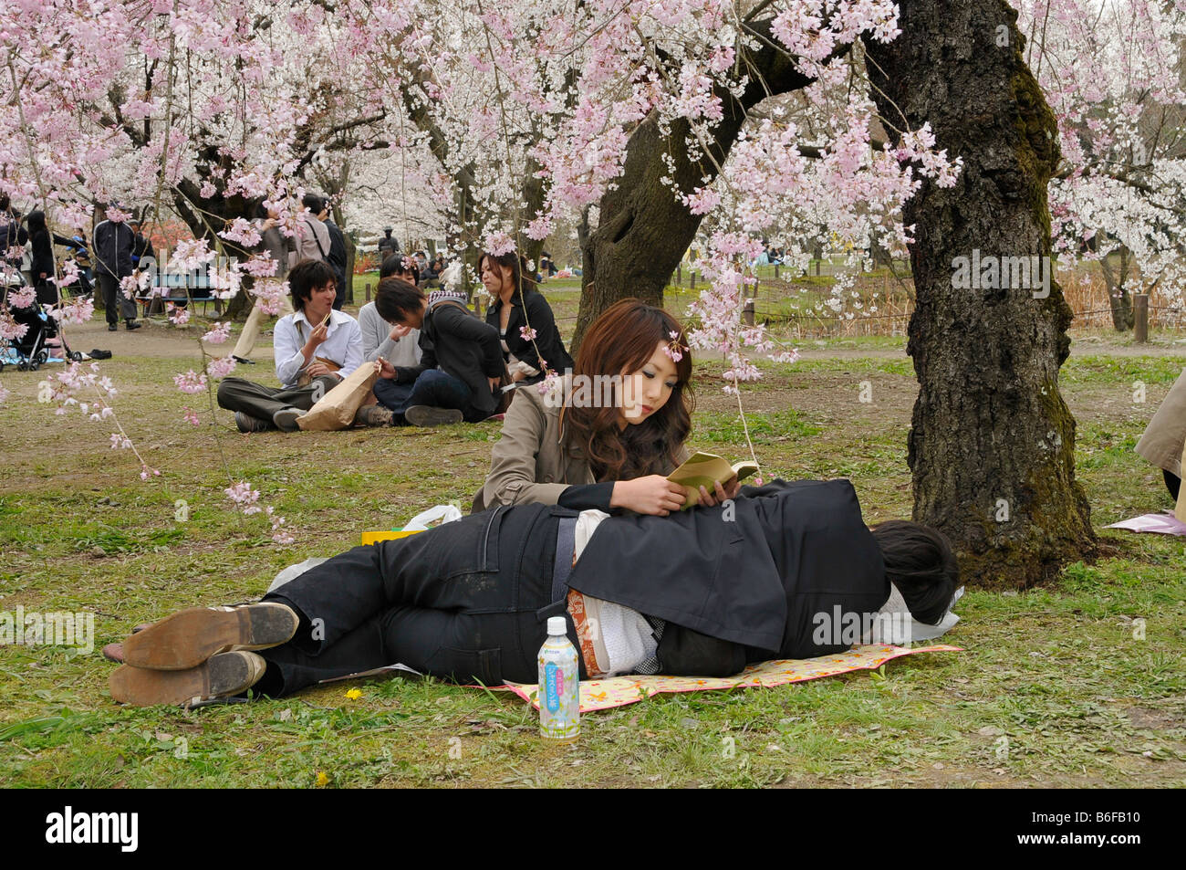 Young Couple Under Blossoming Cherry Trees While Celebrating