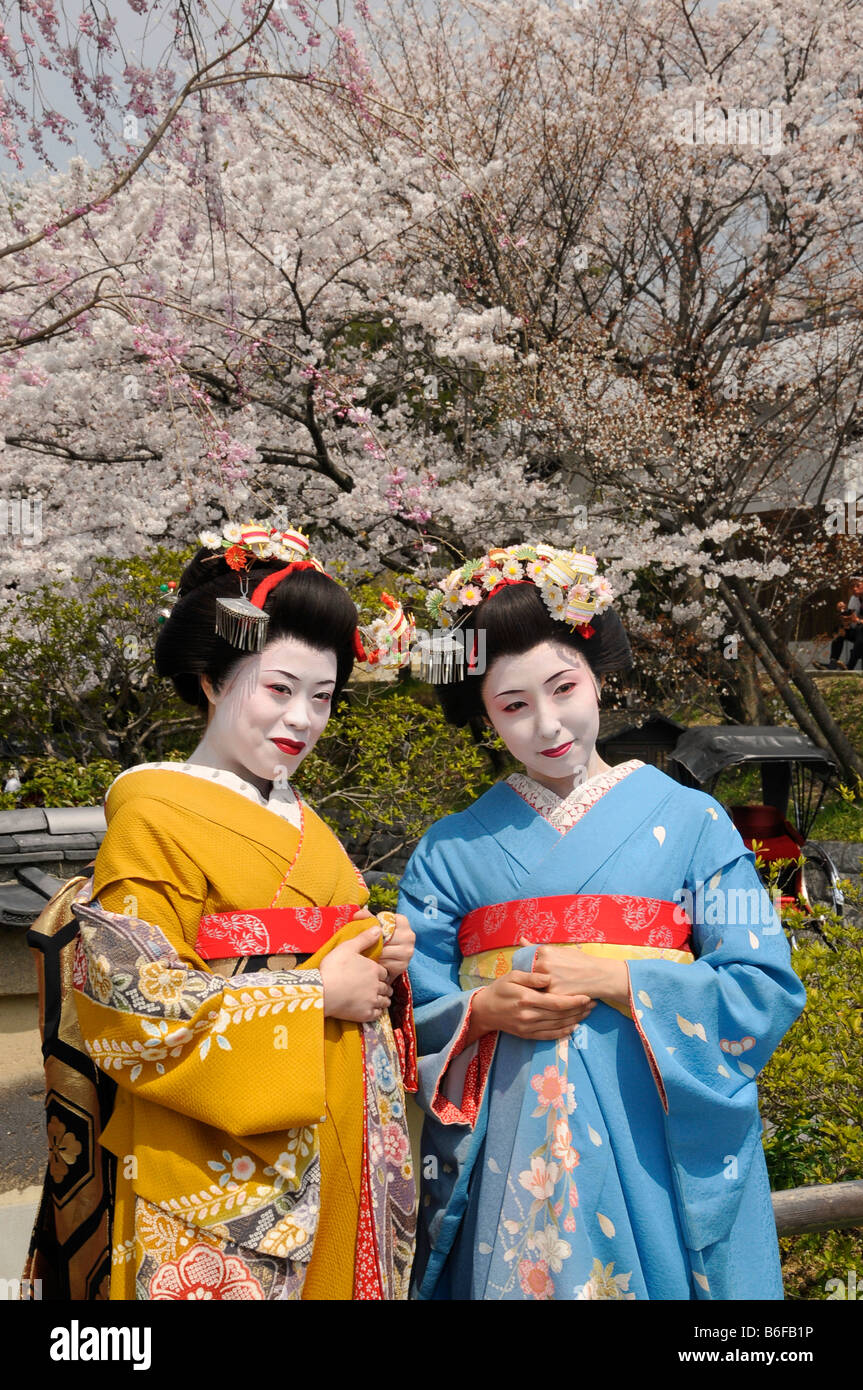 Two Maiko, trainee Geisha, in front of cherry trees in bloom, Kyoto, Japan, Asia Stock Photo