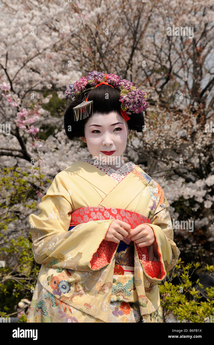 A Maiko, a trainee Geisha, in front of cherry trees in bloom, Kyoto, Japan, Asia Stock Photo