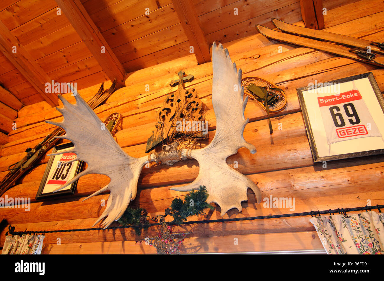 Pair of elk antlers in the Waldkopfstueberl, ski region Sudelfeld, Bavarian Alps, Bavaria, Germany, Europe - Stock Image