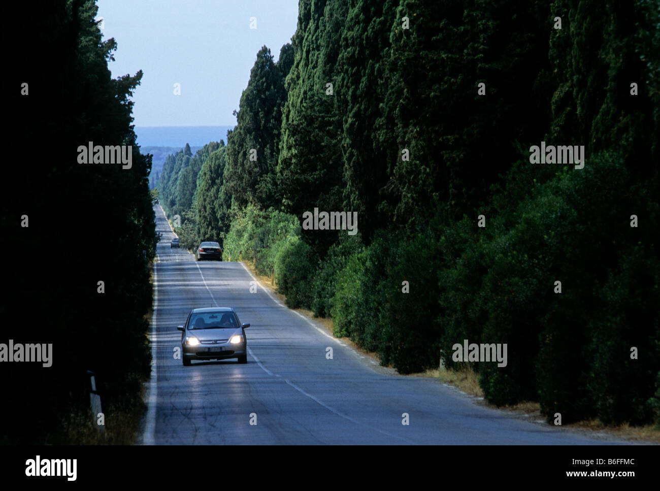Cypress avenue between San Guido and Bolgheri near Castagneto Carducci, Livorno province, Tuscany, Italy, Europe - Stock Image