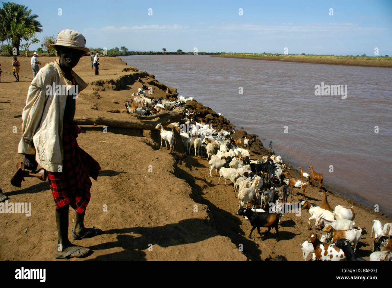 Shepard with goats at Omo River, Dashenesh people, Ethiopia, Africa Stock Photo