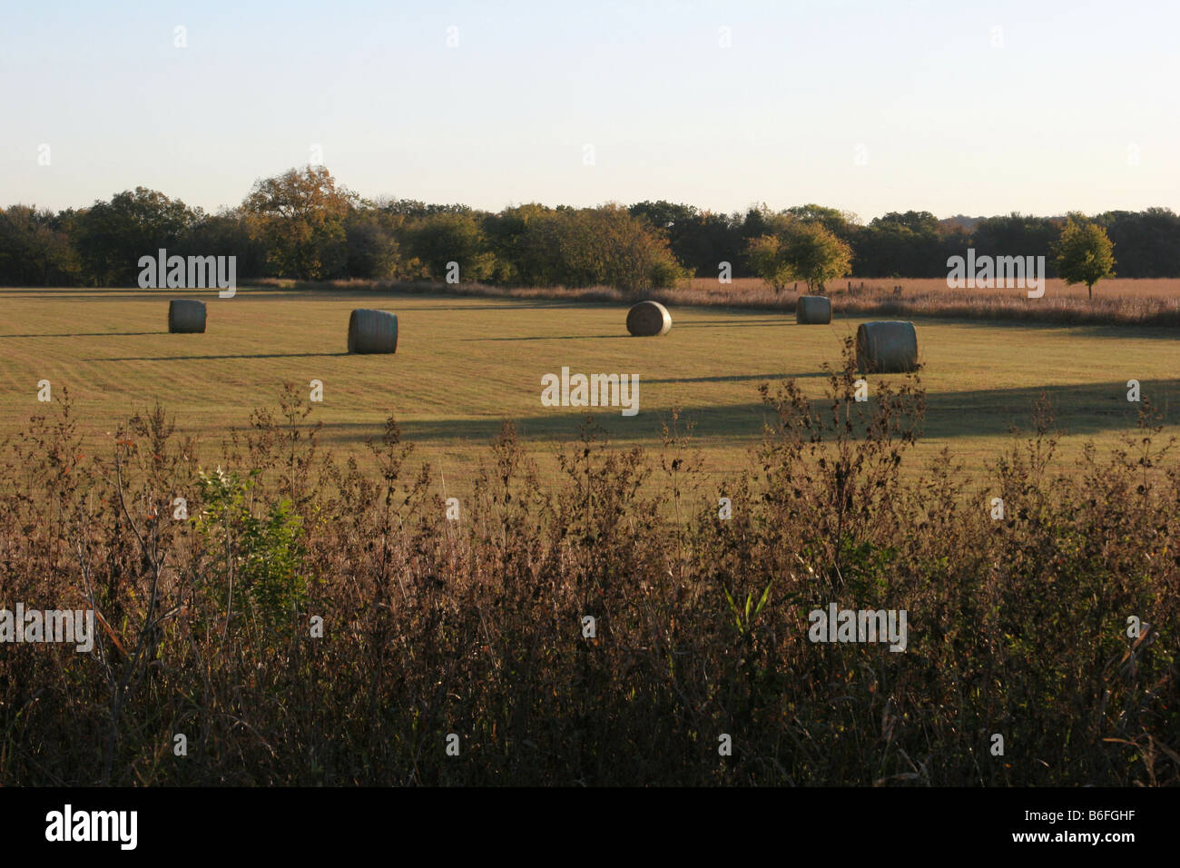 A farm or ranch hayfield in Northcentral Texas - Stock Image