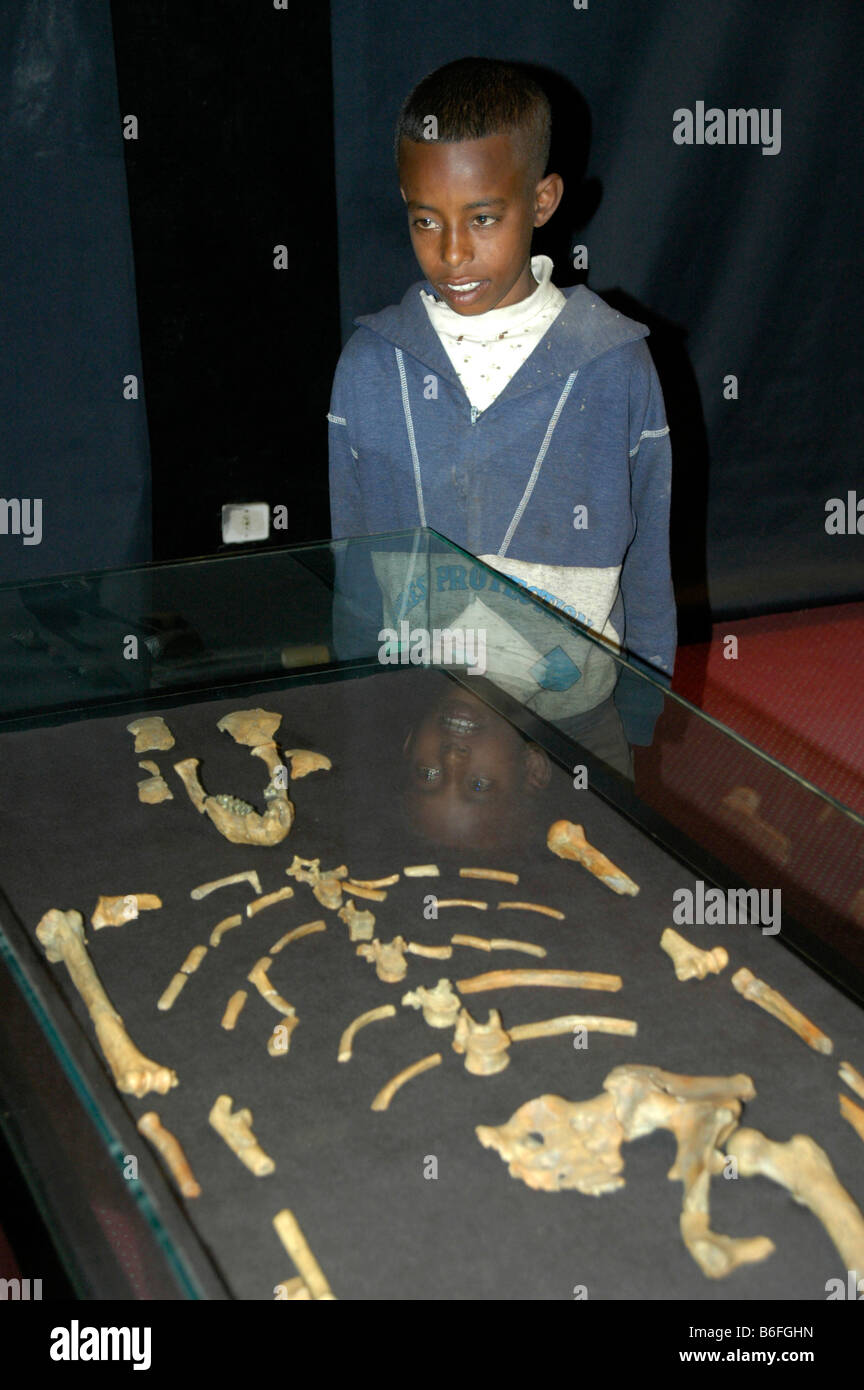 Anthropology, boy standing behind a cabinet displaying the skeleton of Lucy, also called Dinknesh (Australopithecus - Stock Image