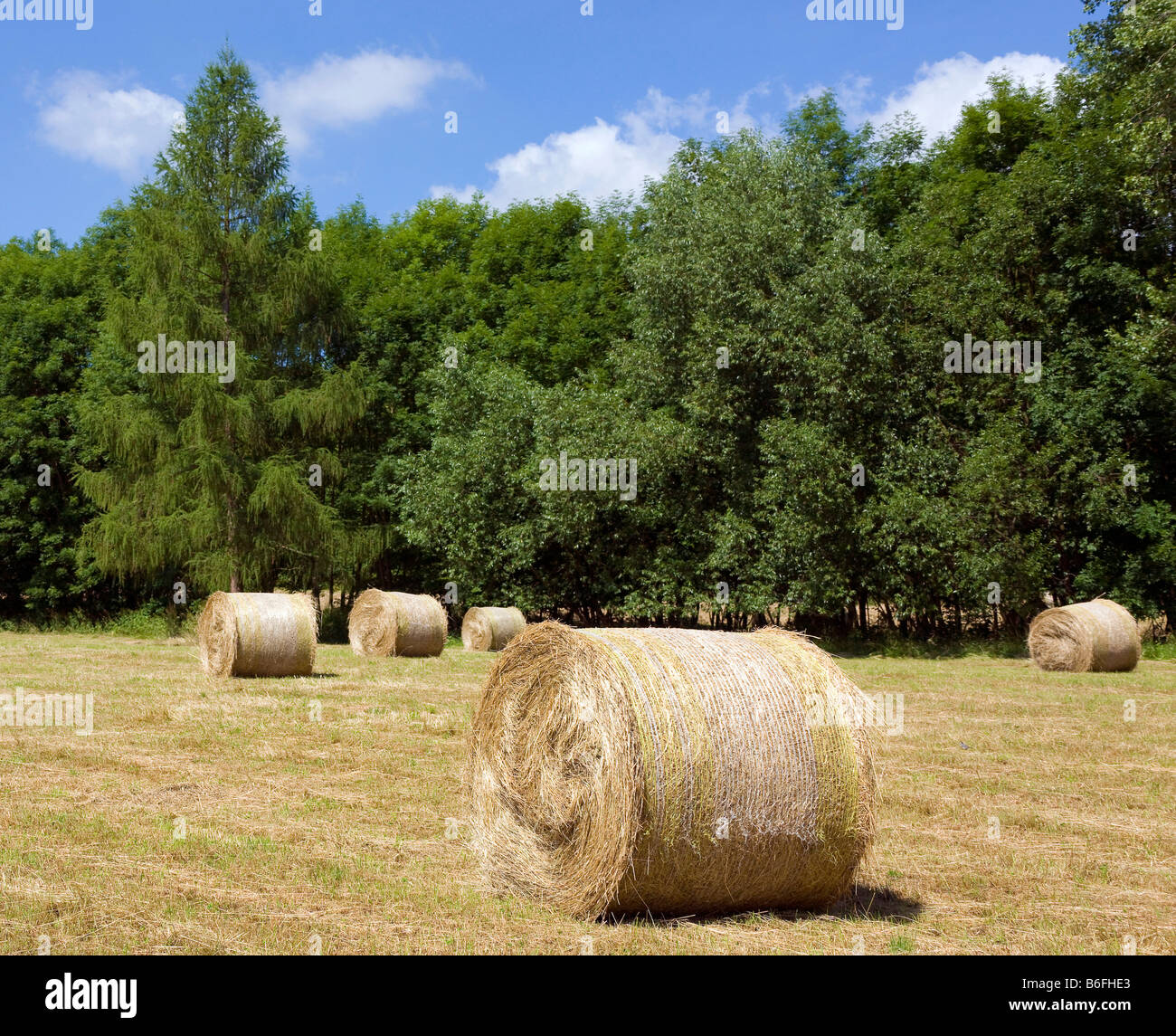 Field and forest near Muehlhausen, Thuringia, Germany, Europe Stock Photo
