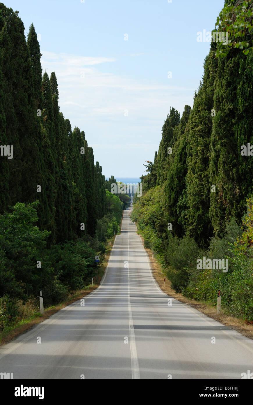 Bolgheri Tuscany Italy Avenue of Cypress Trees Stock Photo