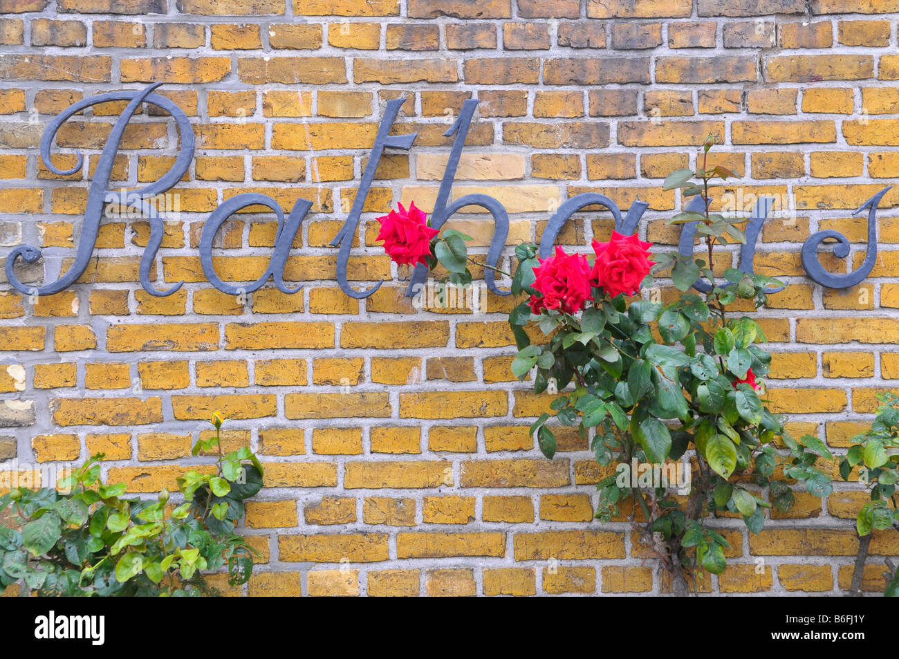 Sign, Rathaus or Town Hall, on a wall, red roses growing up it, in Maasholm, Schleswig-Holstein, Germany, Europe - Stock Image