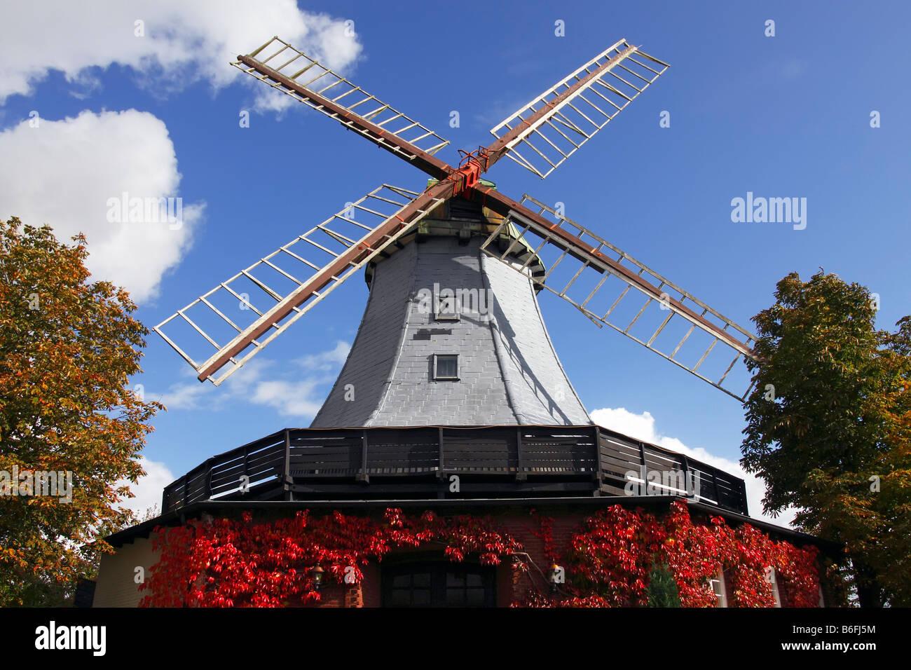 Historic windmill in dutch style, Pirsch Mill, Hamfeld Mill, restaurant, hotel, Hamfelde, Herzogtum Lauenburg, Schleswig Stock Photo