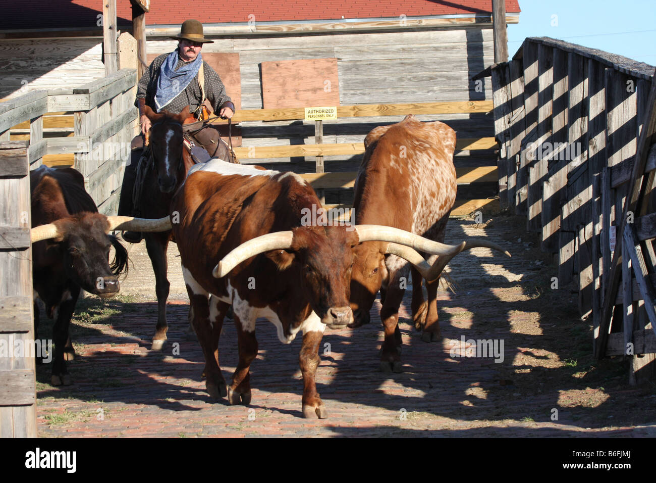 The Texas Longhorn Cattle Drive At The Stockyards In Fort Worth Texas Stock Photo Alamy