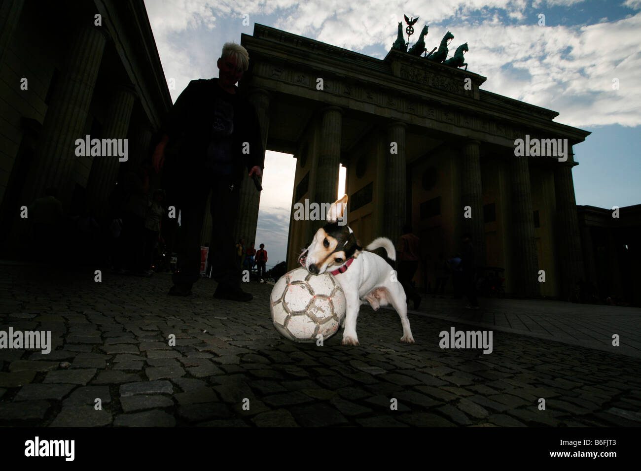 Jack Russel Terrier playing with a ball in front of the Brandenburg Gate at night, Brandenburger Tor, Berlin, Germany, - Stock Image