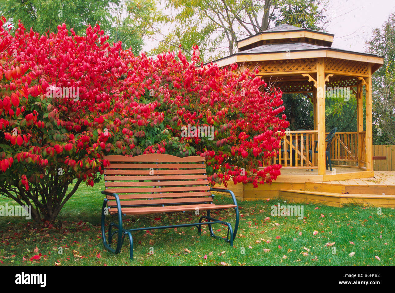 Garden Bench And Gazebo Backyard Garden Scape Tranquil Tranquility  Tranquility Calm Peaceful Harmony Red Euonymus Alatus