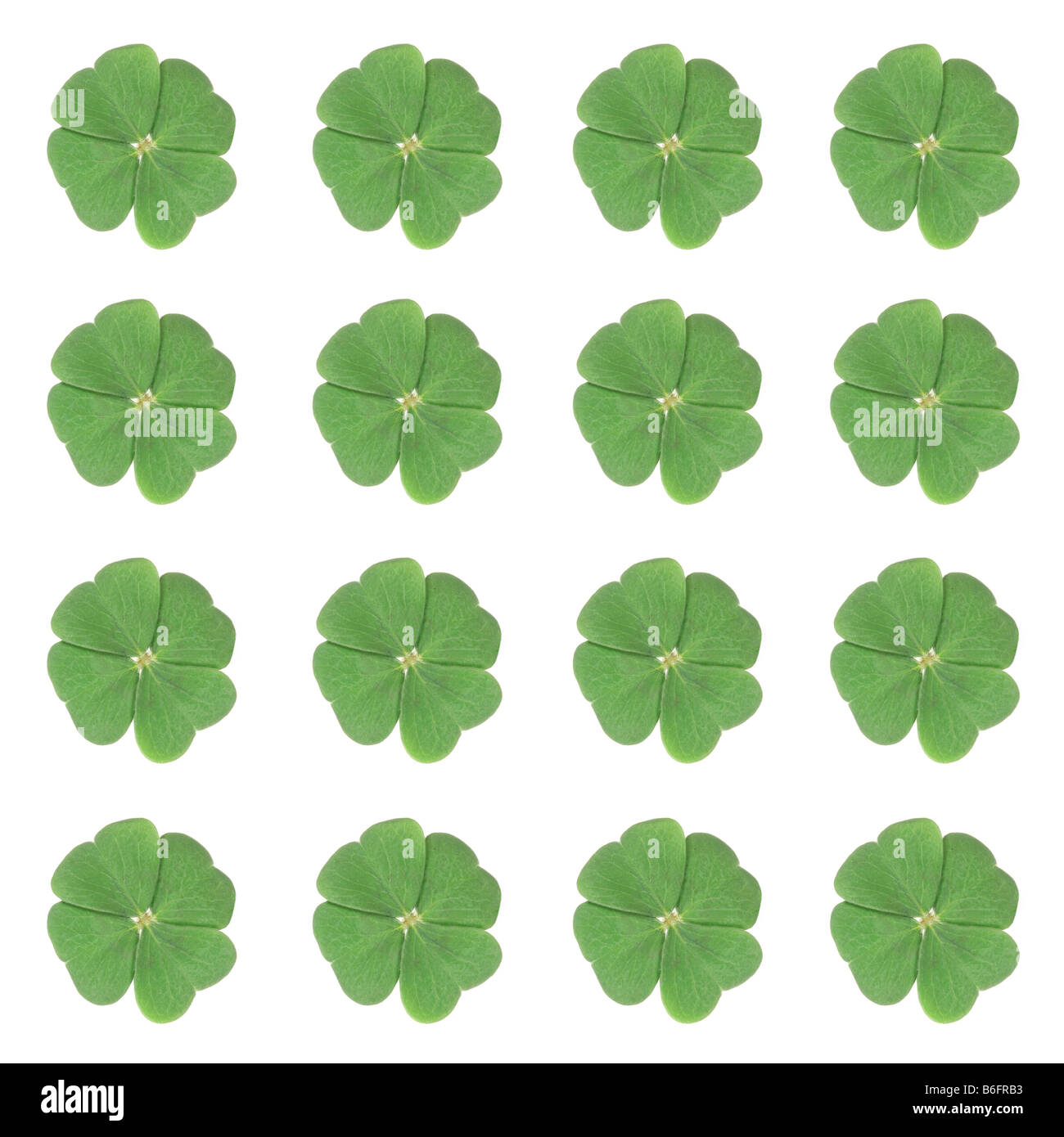 Sixteen four-leaf-clovers arranged symmetrically Stock Photo