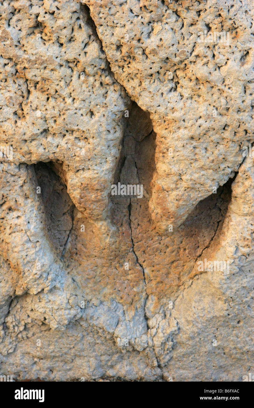 The footprint of a dinosaur in the mudflats of Glen Rose Texas solidified in the sediment rock - Stock Image
