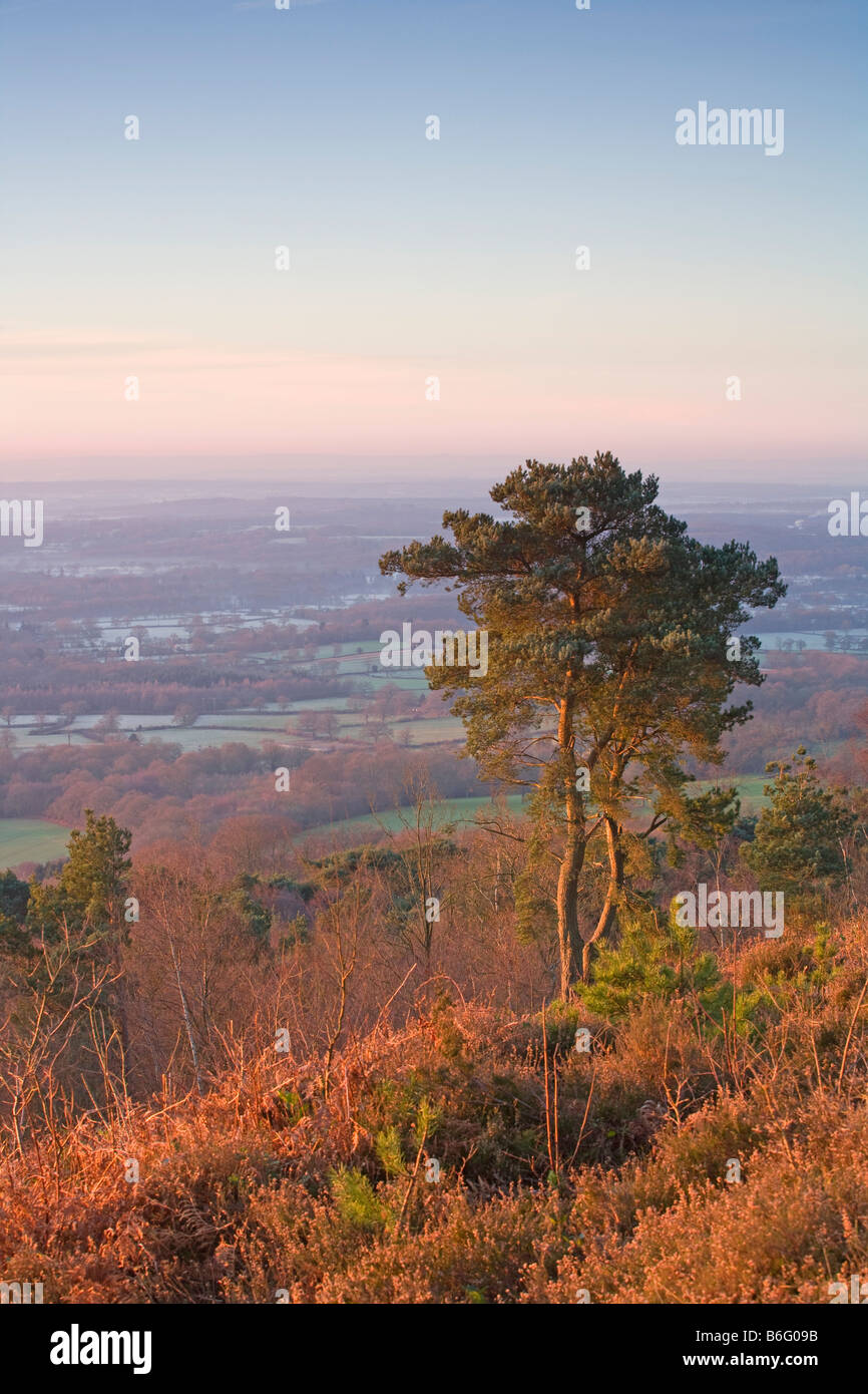 Early morning [view from Leith Hill] [North Downs] [Surrey Hills] Surrey - Stock Image