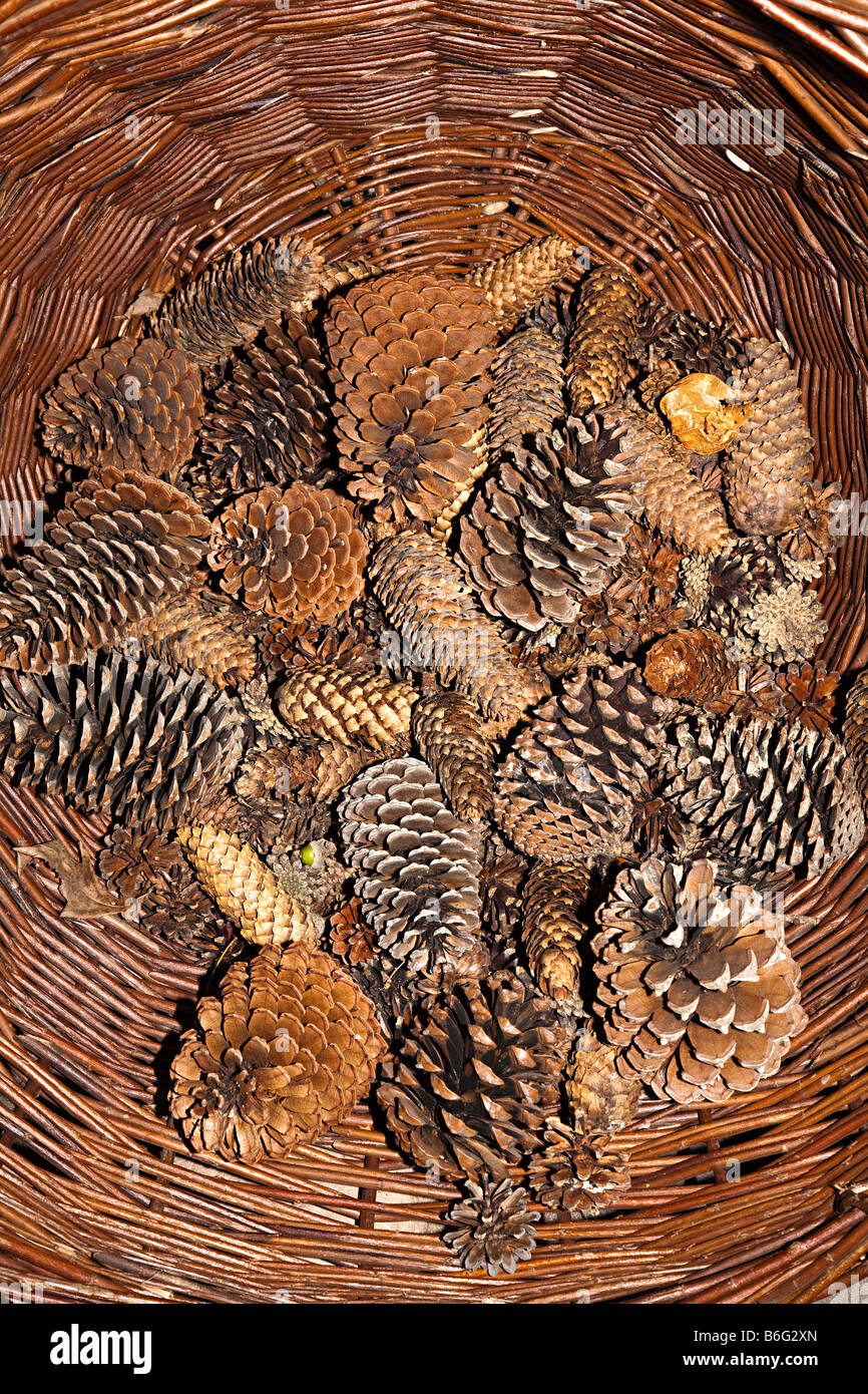Pine cones in wicker basket - Stock Image
